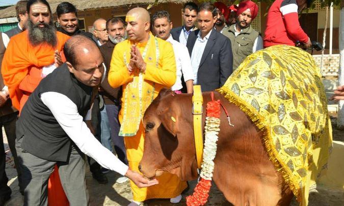 आबकारी नीति से हल होगी बेसहारा सड़कों पर घूम रही गाय और बैलों की समस्या मिलेगा आशियाना